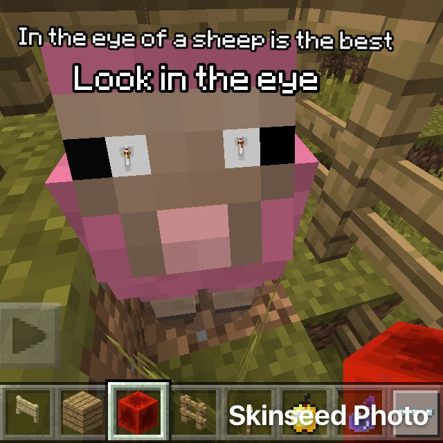 how to make a pink sheep in minecraft