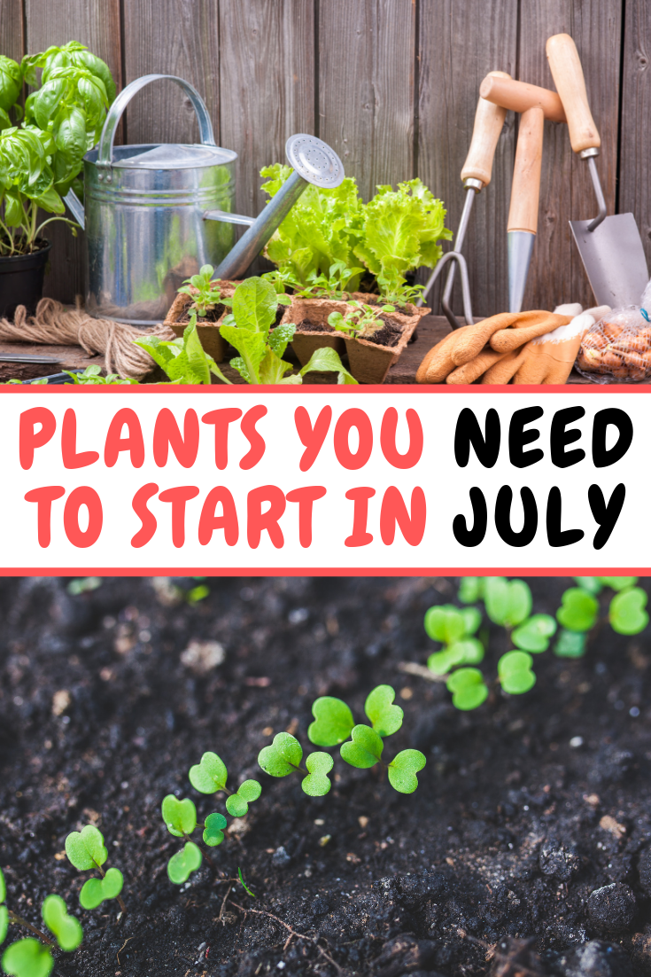 What To Grow In The Month Of July Pastel Dwelling Fall Garden Vegetables Backyard Vegetable Gardens Planting Vegetables