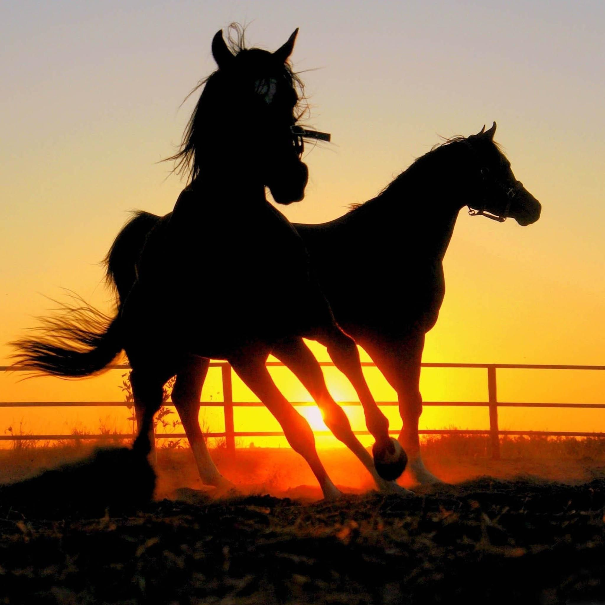 What A Cool Shot Horse Wallpaper Horse Pictures Horses