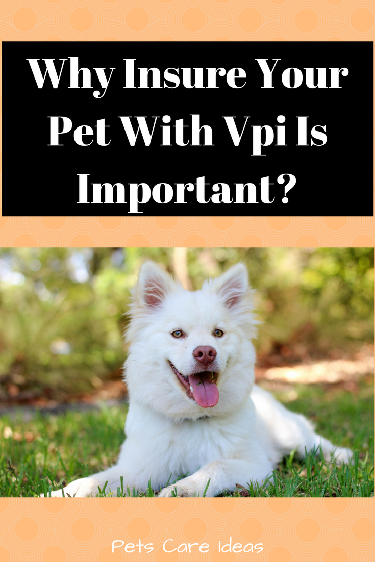 Why Insure Your Pet With Vpi Is Important? Pet insurance