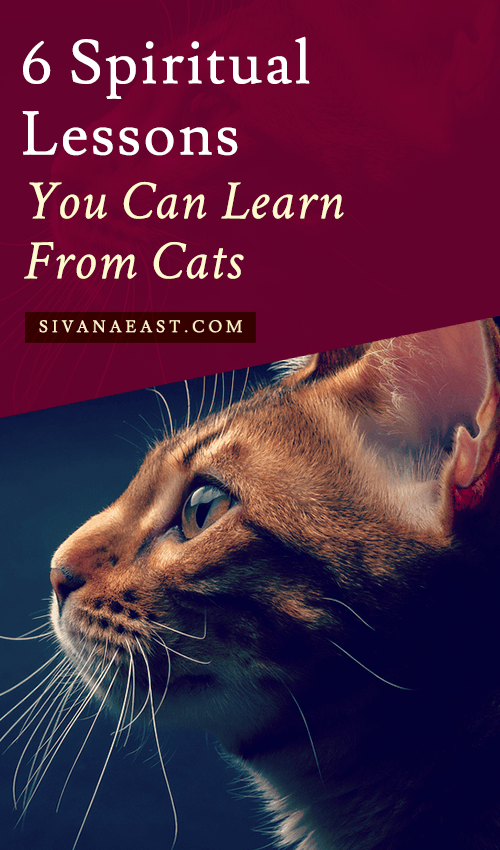 6 Spiritual Lessons You Can Learn From Cats Cat spirit