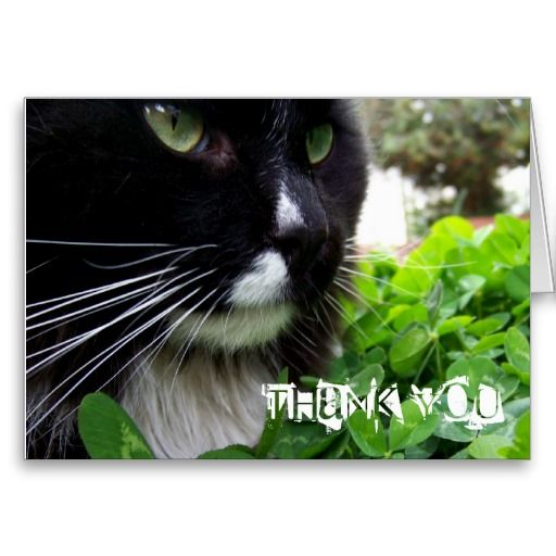 Black And White Cat Thank You Card
