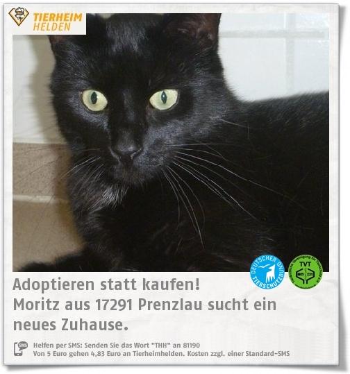 Moritz gehört auch zu der Crew, die im Tierheim Prenzlau