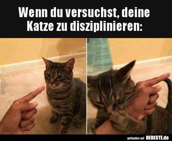 Photo of Si intentas disciplinar a tu gato .. | Fotos divertidas, refranes, w …