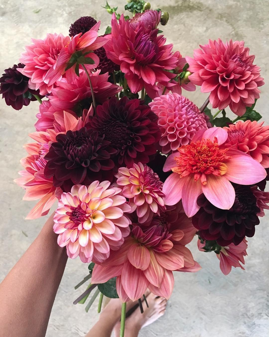 """La Musa de las Flores on Instagram: """"Sunday in the garden. Thank you ..."""