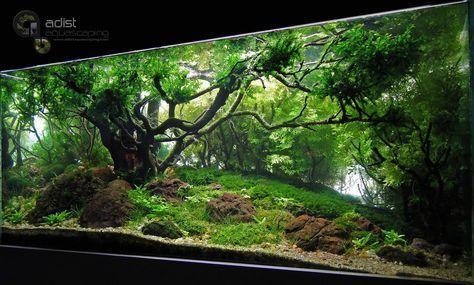 21 Best Aquascaping Design Ideas To Decor Your Aquarium   Tips Inside |  Colorful Fish, Fish Tanks And Goldfish