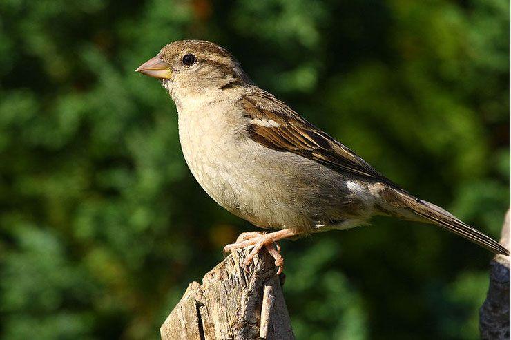 38+ Oiseaux des jardins provence trends
