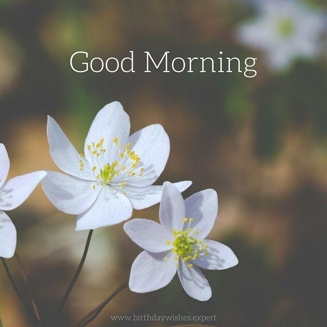 20 good morning images for social media morning pinterest good morning white flowers mightylinksfo