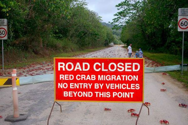 Red Crab migration to Christmas Island See More 13 Pics Here>>>http://goo.gl/lPDlg5   Christmas ...