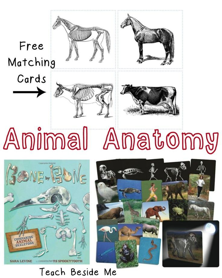 Animal Skeleton Matching Cards Science For Kids Pinterest