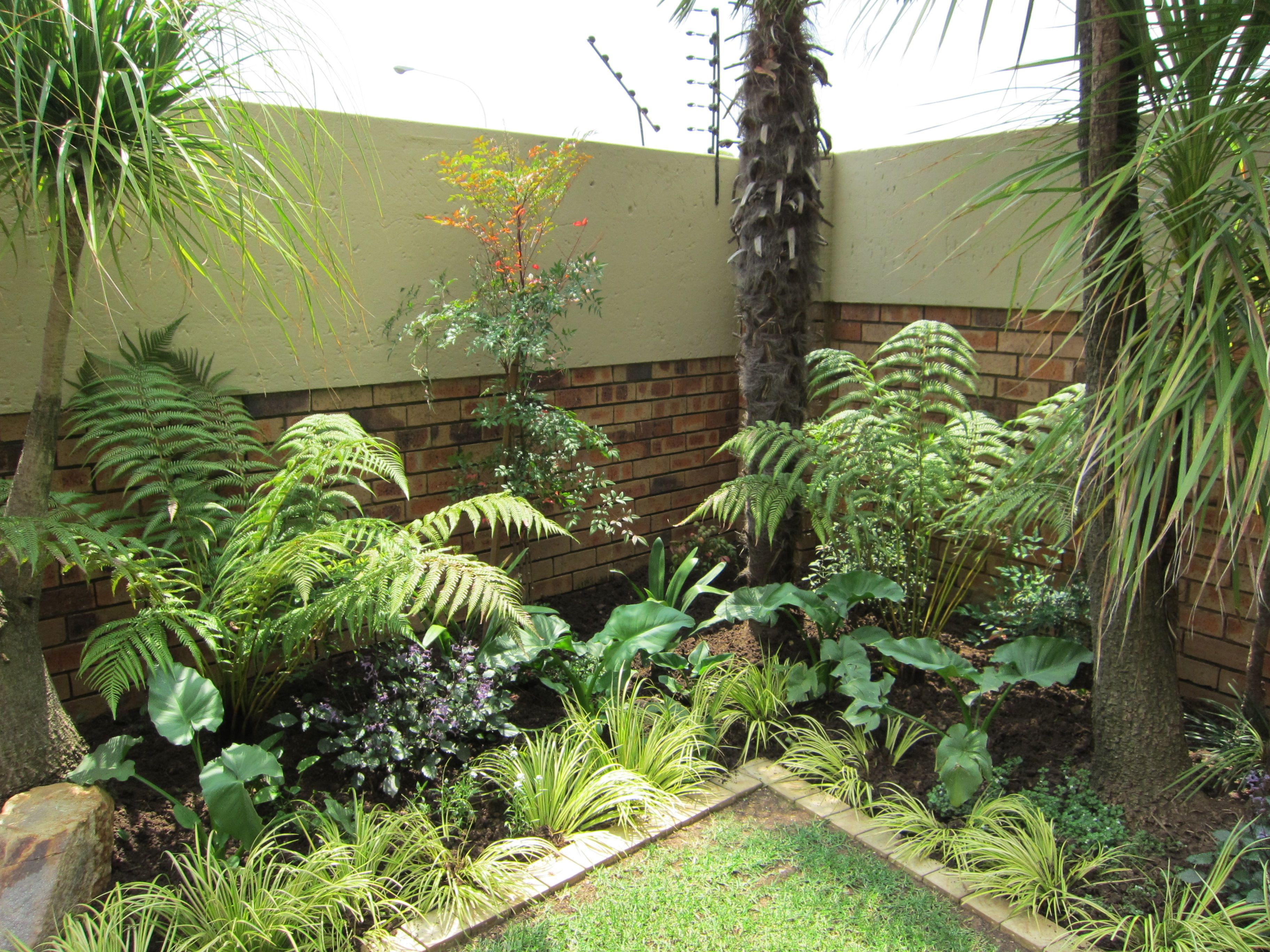 Photo Petit Jardin Exotique jardin tropical | tropical garden plants, small tropical
