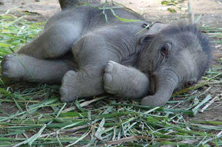 Baby elephant...It's so cute I'm gonna die!!!