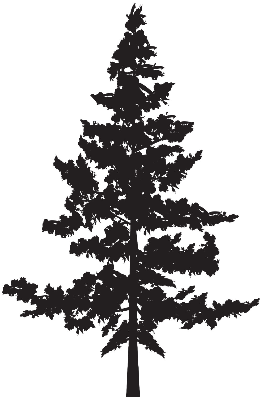 Pin By Miguel Ordonez On Homeschool Pine Tree Silhouette Silhouette Clip Art Tree Silhouette