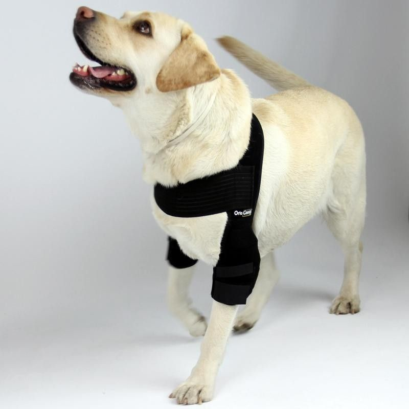 Elbow Pads Dog Braces Dogs Dog Care
