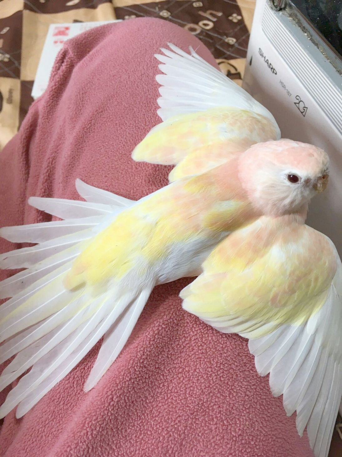 Check It Out Free Pet Birds Near Me Super Cute Animals Cute Baby Animals Pet Birds