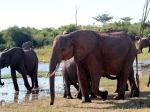 Elephants, Lake Kariba, Zimbabwe from www.GreatZimbabweGuide.com