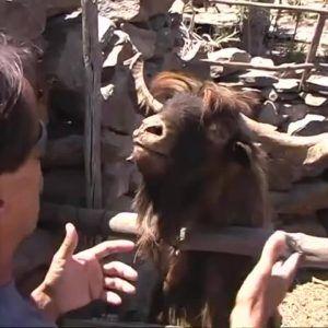 When I realize Im losing the argument  Credit: JukinVideo #news #alternativenews