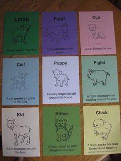 Baby Animal Movements Animal Movement Animals For Kids Animal