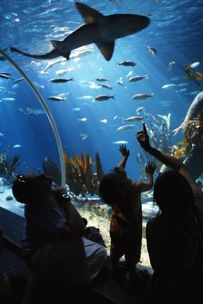 SEA LIFE Helsinki is an underwater world with over 50 aquariums and the most amazing water creatures. Located next to the Linnanmäki amusement park and you can even buy a combo ticket for both of them. More info: https://www.visitsealife.com/helsinki/en/