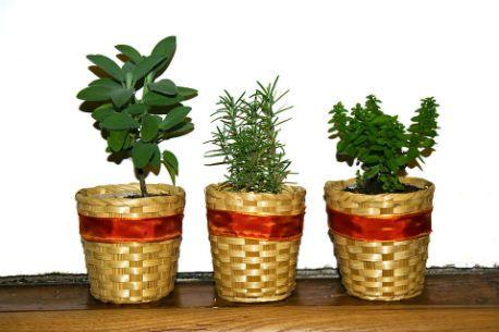 Photo of Your Best Indoor Herb Garden – HERBS FOR HEALTH