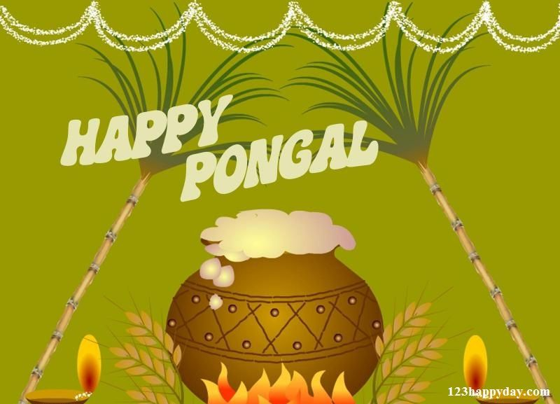 pongal festival pongal images  pongal festival in essay pongal is the biggest harvest festival for the people of tamil nadu people belonging to hindu faith observe this festival