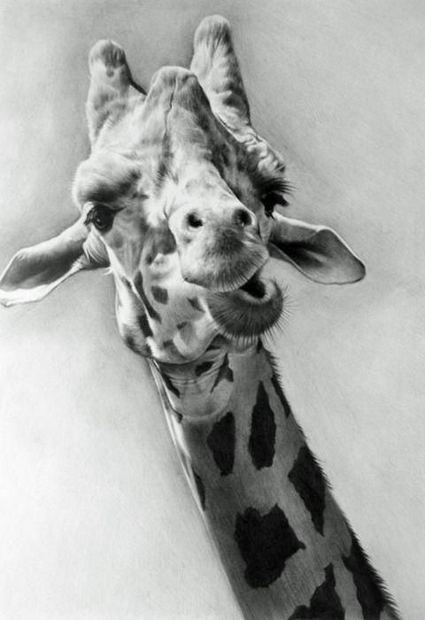 draw @Ana Camargo a sua cara mesmo!!!!