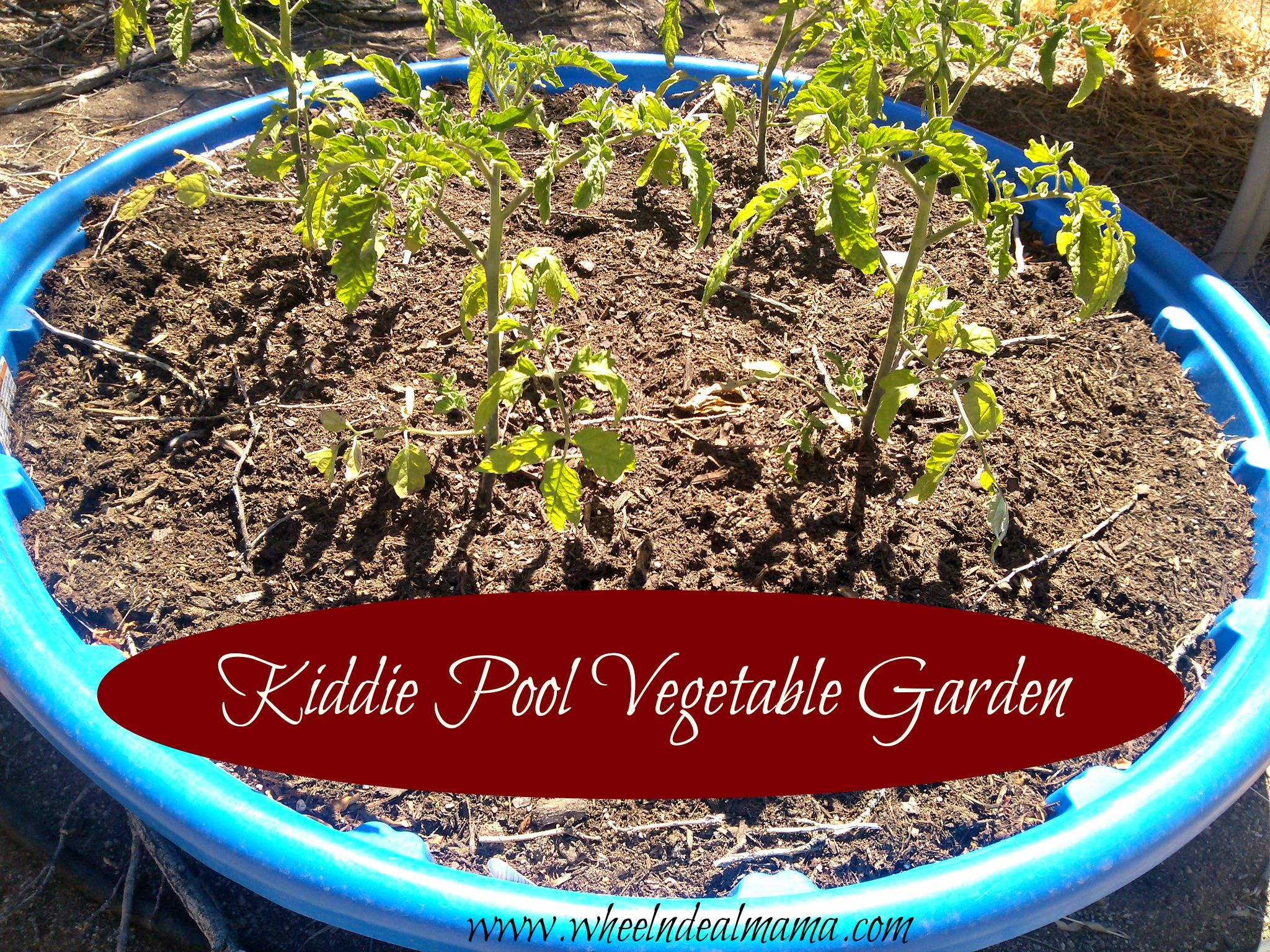 do-it-yourself: kiddie pool vegetable garden! | frugal and money