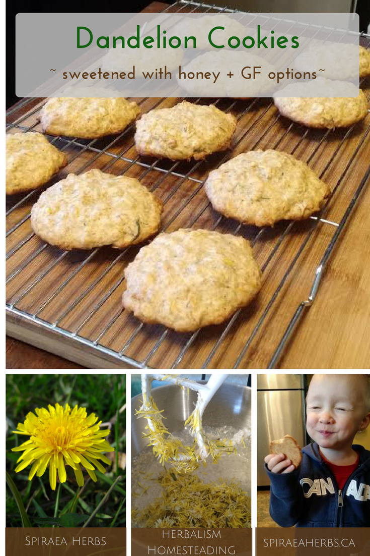 Dandelion Cookies Recipe Dandelion Recipes Food Dessert Recipes