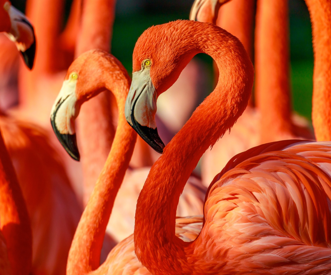 The 10 Best Zoos in the U.S. Why are flamingos pink, Zoo