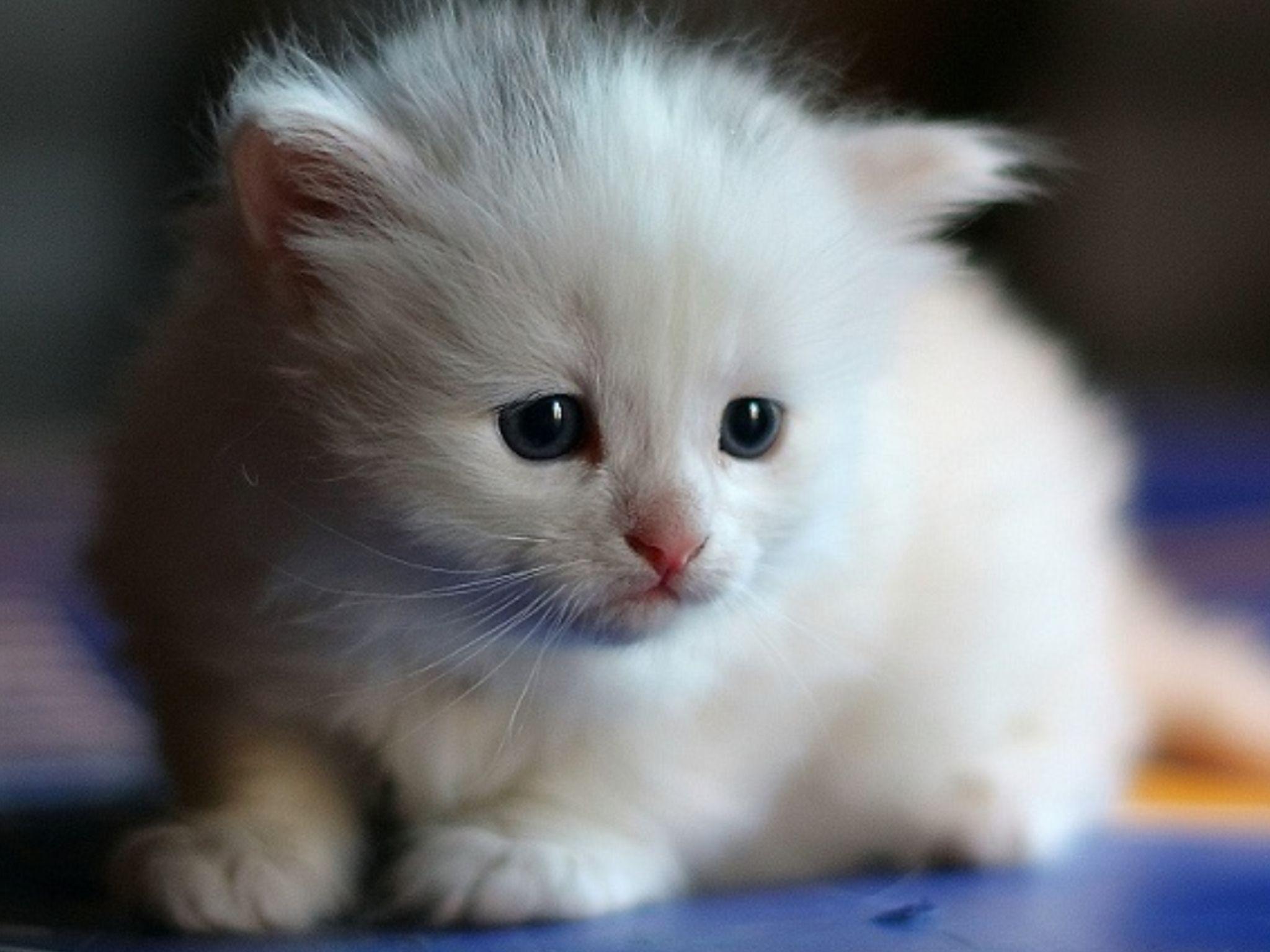 Pin By Susan Munoz On Love Love Love Cute Animals Animals Beautiful Cats