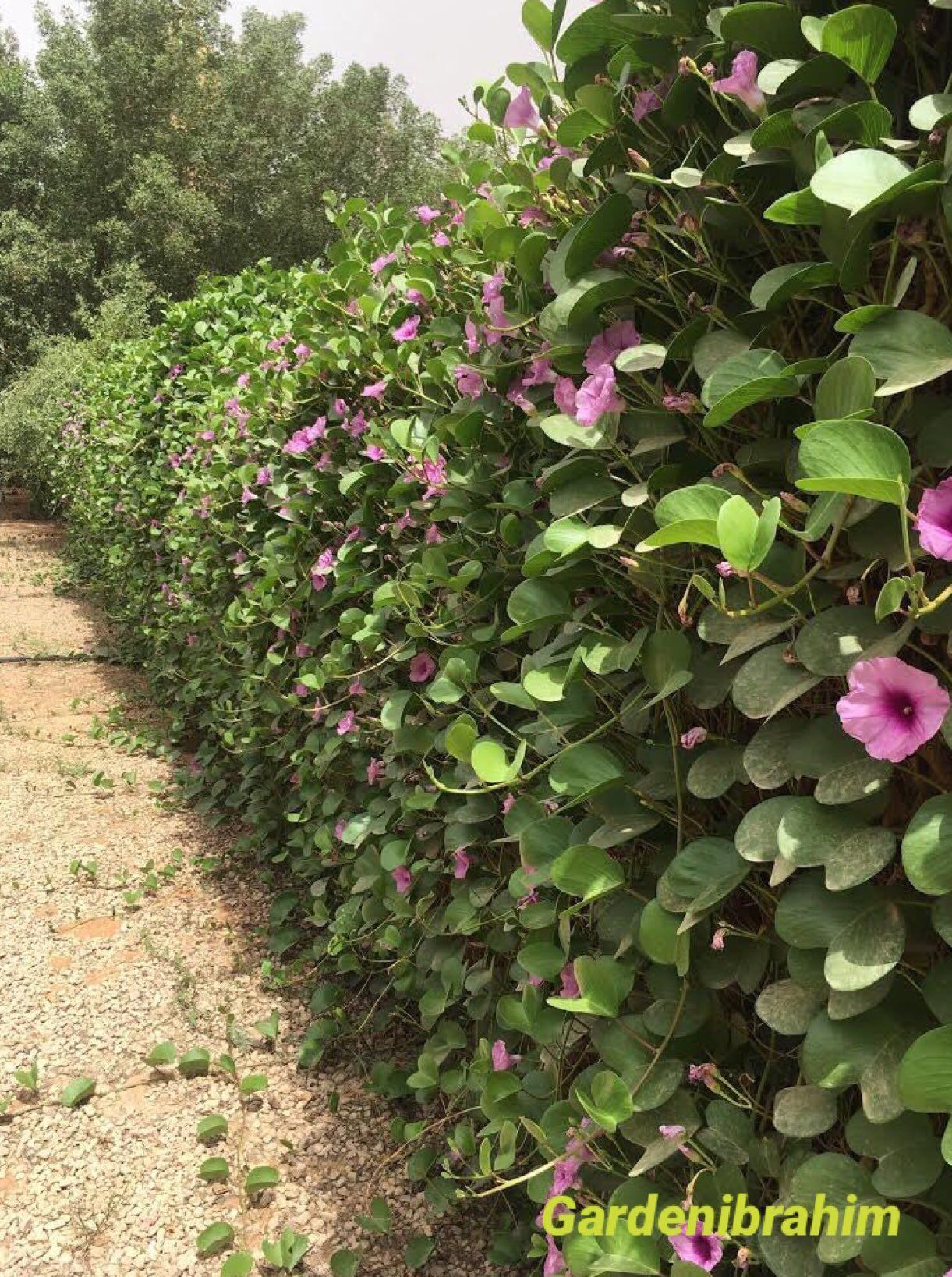 حديقة البيت On Twitter Plants