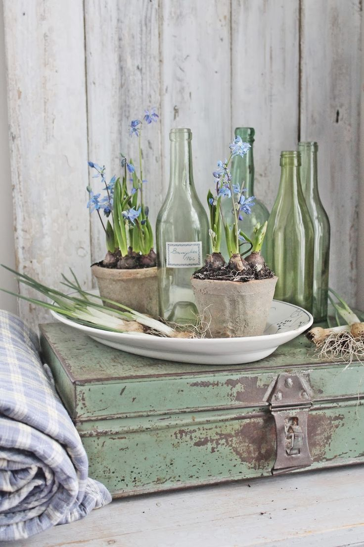 VIBEKE DESIGN: Spring Bulbs