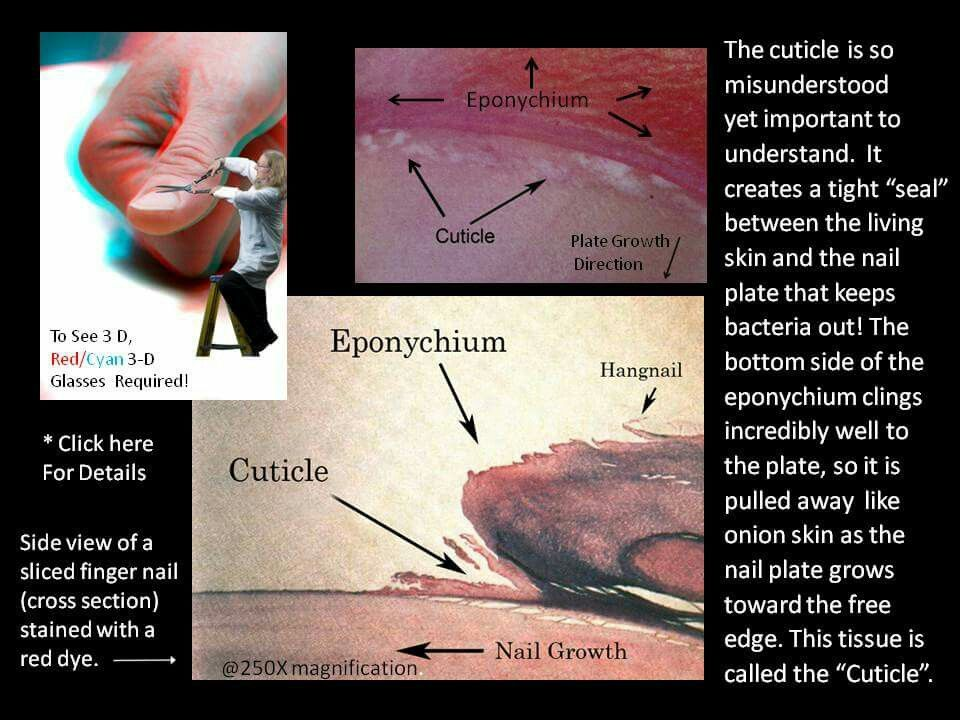 Doug Shoon explains the difference between the eponychium and ...