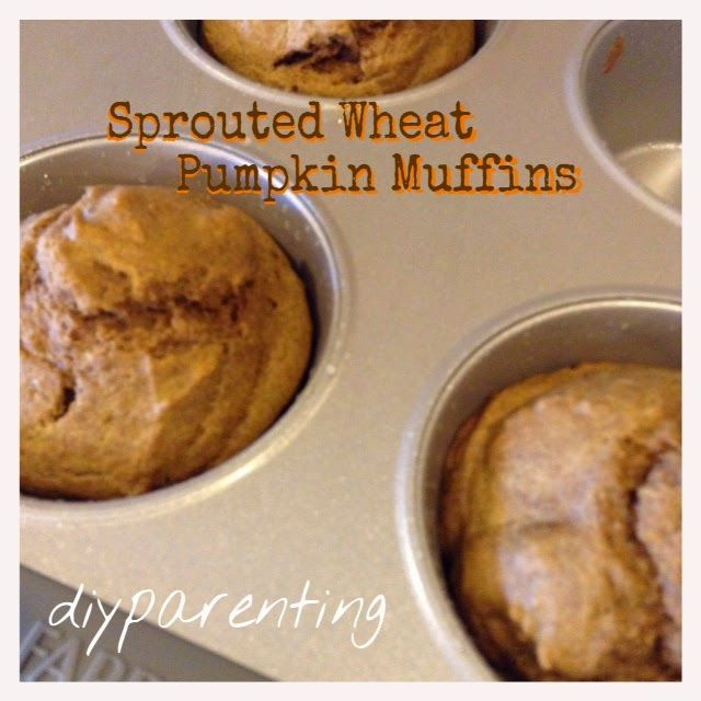 Sprouted Wheat Pumpkin Muffins-- egg free! sugar free! -- from DIYparenting