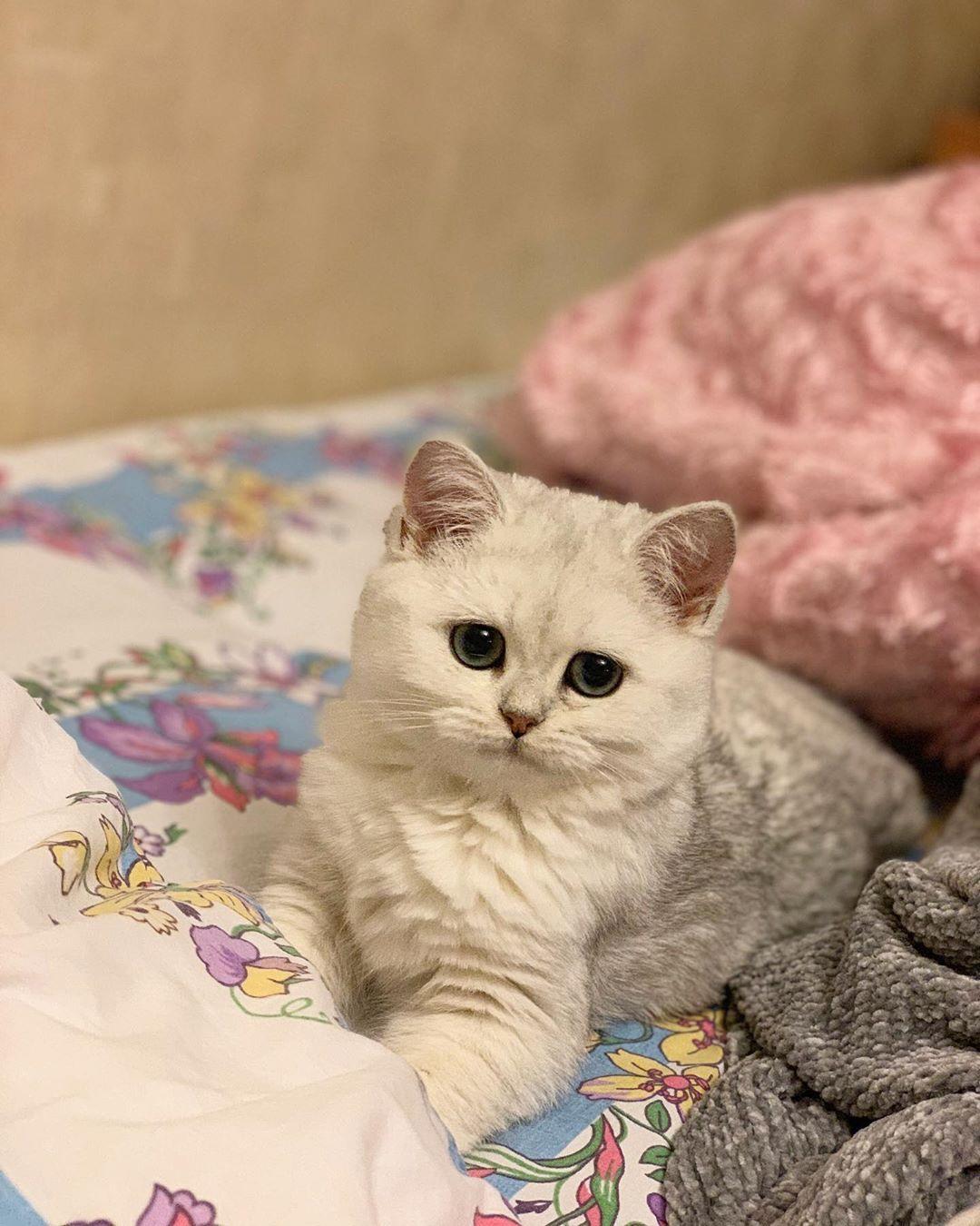 Zhdyot Poka Hozyajka Tozhe Lyazhet Spat Cute Cat Drawing Scared Cat Baby Cats