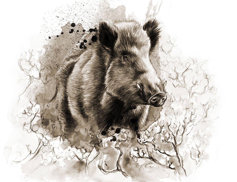 Wildschwein Portrait Portrait Of A Wild Boar Wildschwein Tierspuren Waldtiere