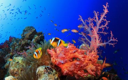 Colorful Ocean Corals And Sealife Hd Wallpapers Wallpapers For