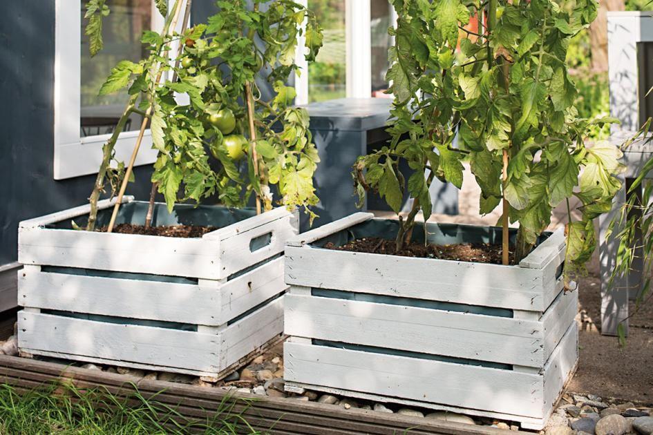 47++ Tomaten auf der terrasse Trends