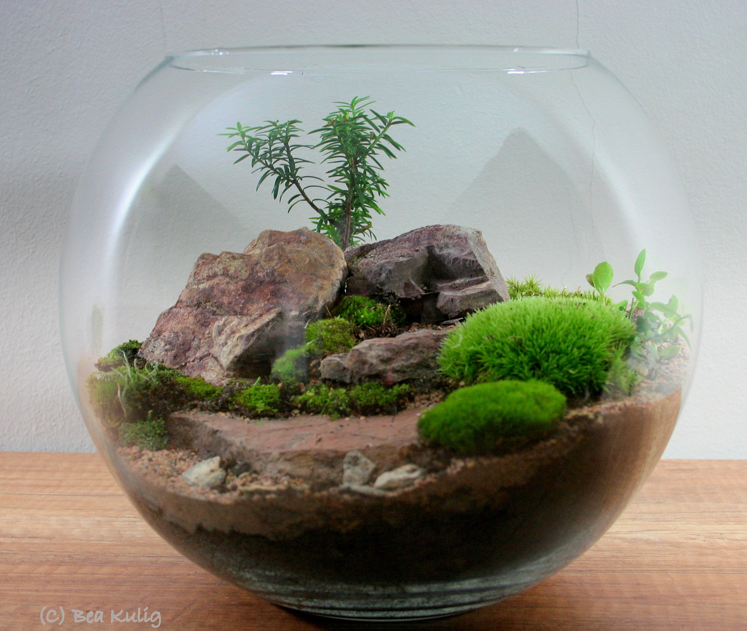 meandry natury terrarium pinterest terr rios terr rio e mini jardins. Black Bedroom Furniture Sets. Home Design Ideas