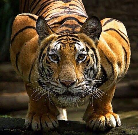Animais / Animals - Comunidad - Google+