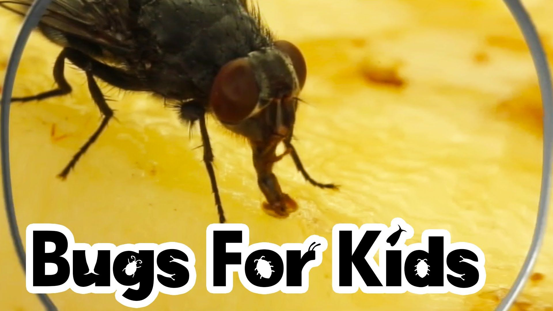 Flies For Kids With Images