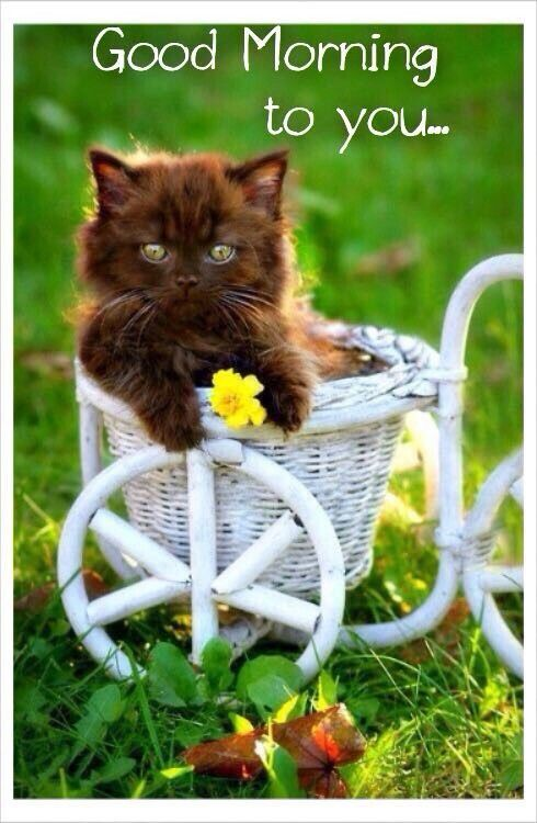 75 Funny Good Morning Memes To Kickstart Your Day Kittens Cutest Cute Animals Pets