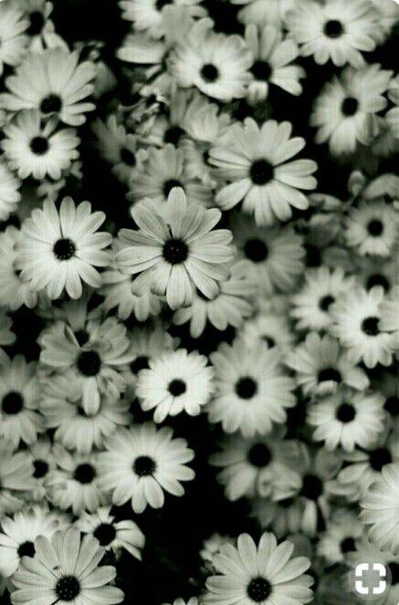 Flores Bonitas Para Fondos