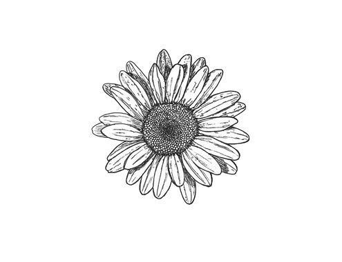 Black And White Flowers Tumblr Transparent