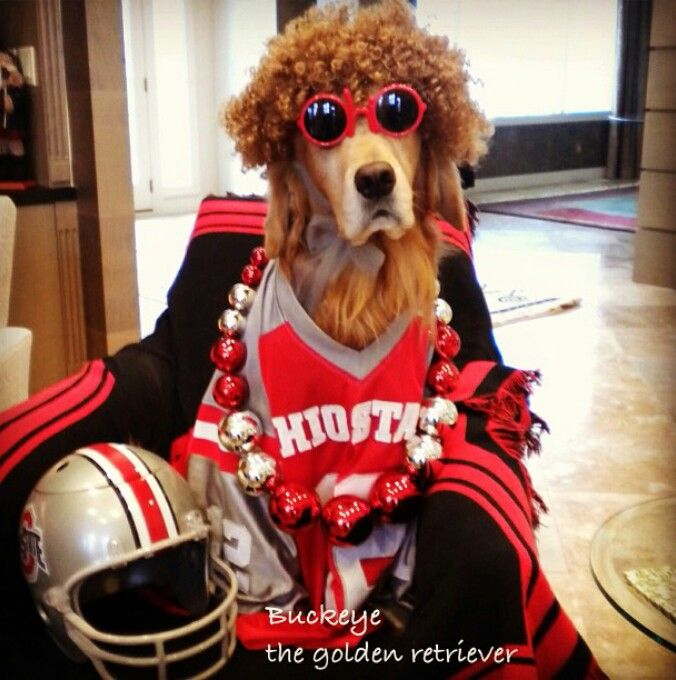 acf8569517852 If every Buckeye fan in O-H-I-O was a dog, just waiting for the game ...