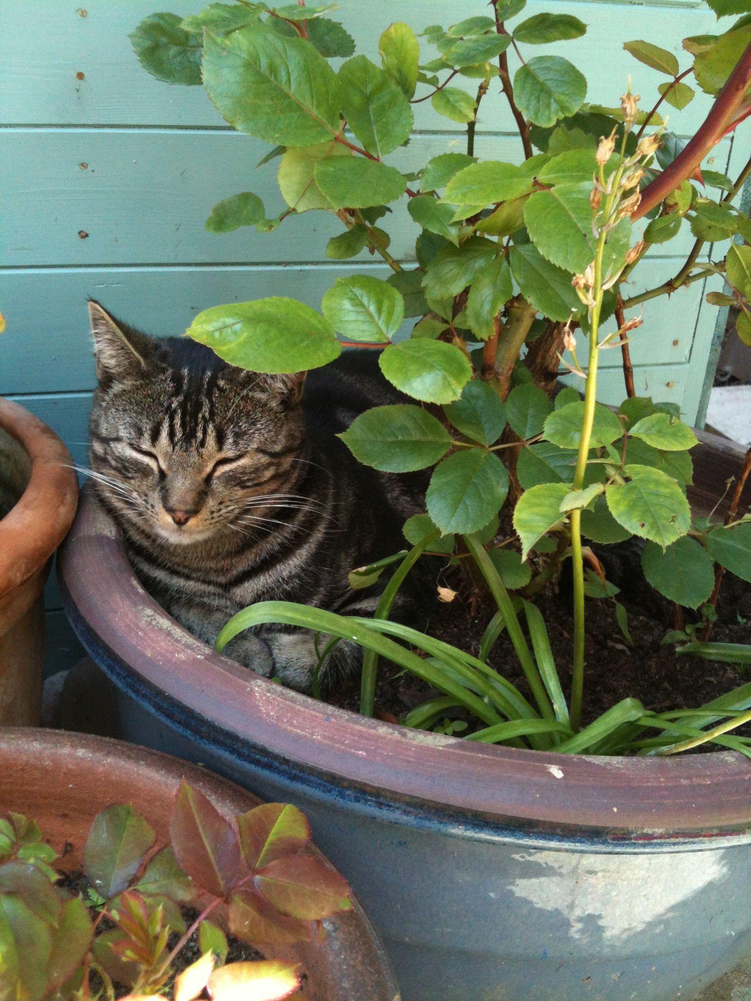 Seeing My Cat Otto Sleeping In His Preferred Flower Pot Kittens Kittens Cutest Cat Garden