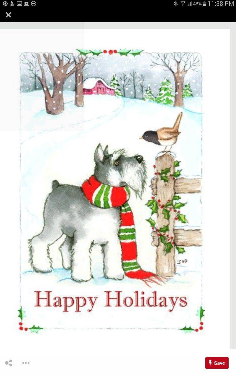 Pin by Jeanne Strater on schnauzer | Pinterest | Dog