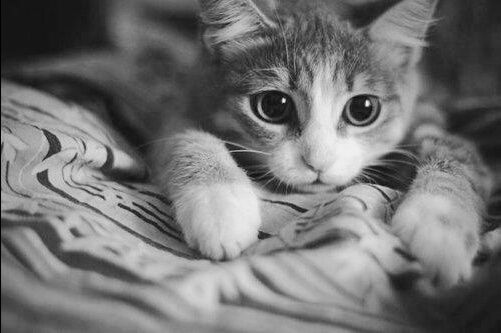 Tumblr cute black and white photography google search