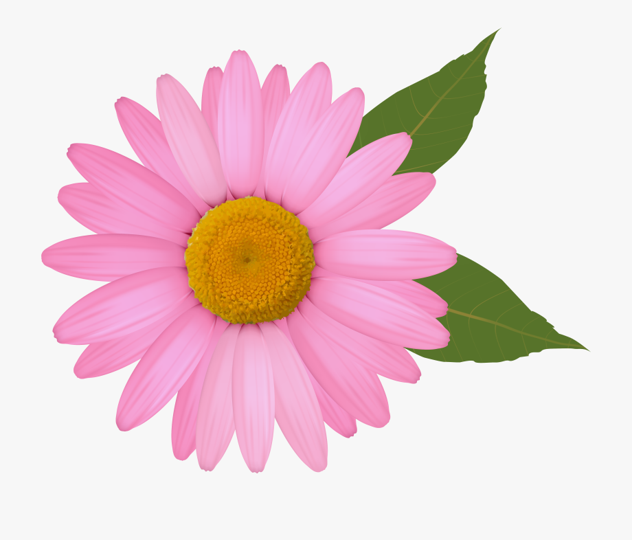 Pink Daisy Png Clipart Image Daisy Image Clip Art Flower Clipart