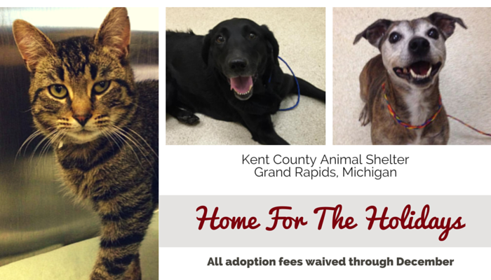 Michigan Shelter Waives Adoption Fees Through End Of The Year Animal Shelter Adoption Dog Adoption